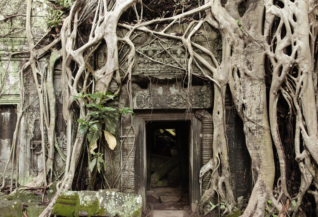 The tree roots growing out of the Ta Prohm ruins