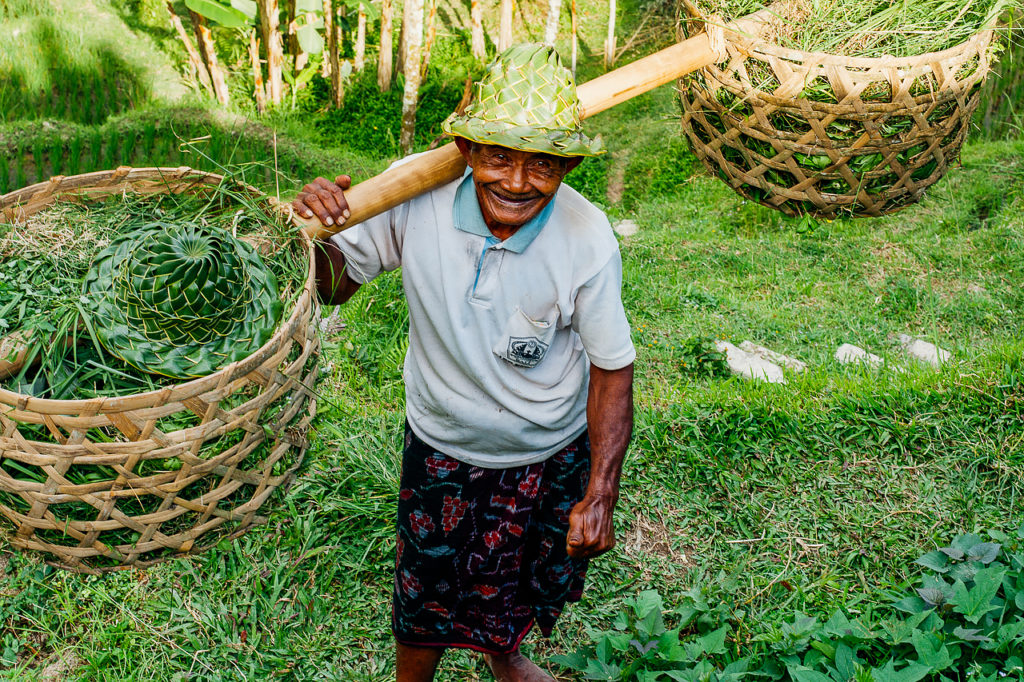 The Balinese field worker, Ubud, Bali, Indonesia