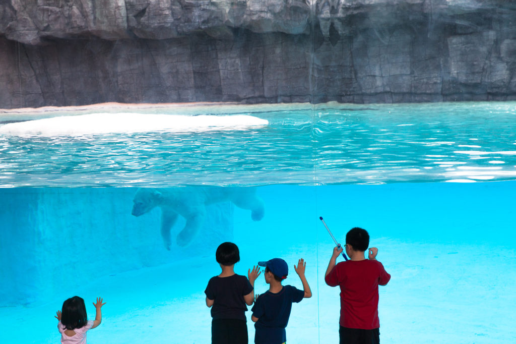 Kids watching a polar bear at the Singapore Zoo, Singapore